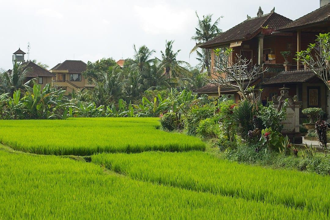 accommodations in ubud