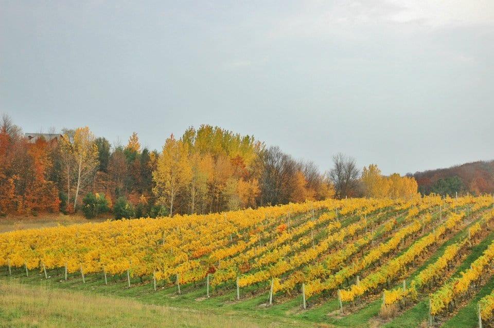 traverse city wine trails