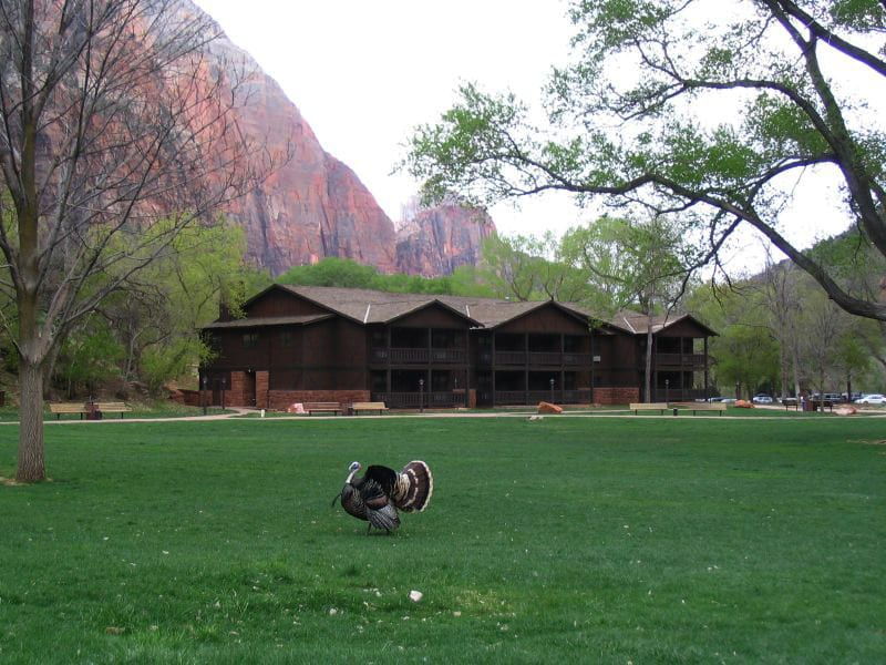 accommodations in Zion national park
